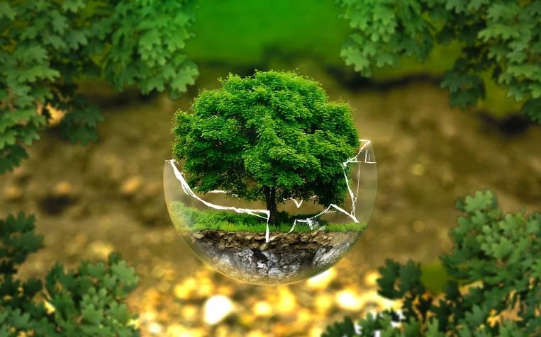 Délinquance environnementale : justice express pour aspirations pédagogiques ?