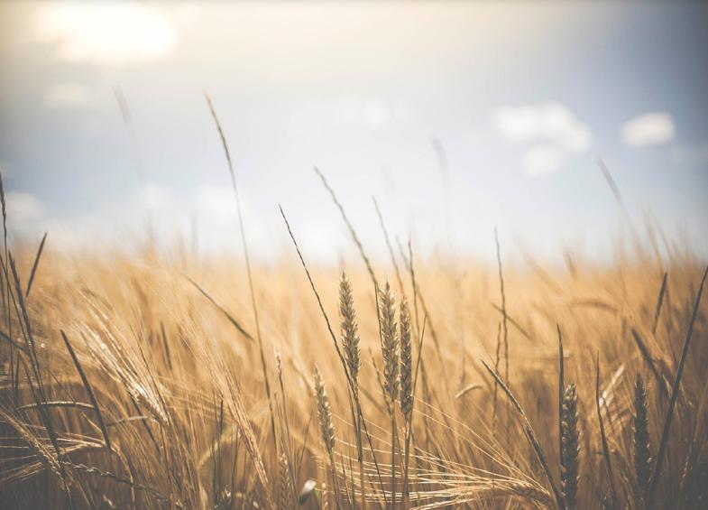 Les biotechnologies agricoles, une clé pour l'indépendance agro-alimentaire